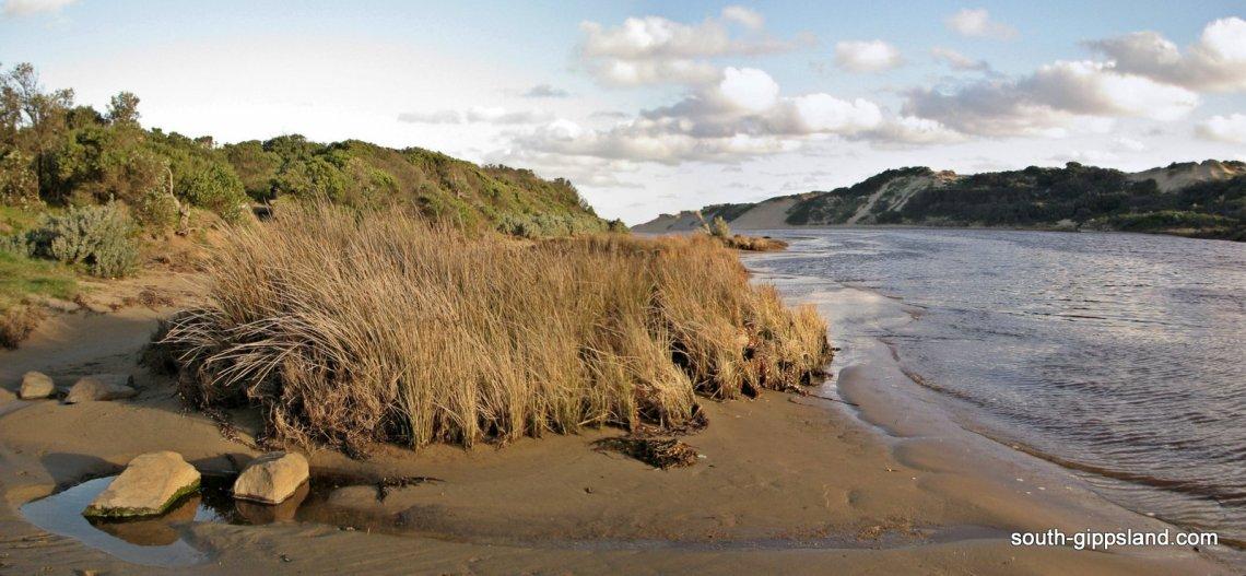 Powlett-River-water scene