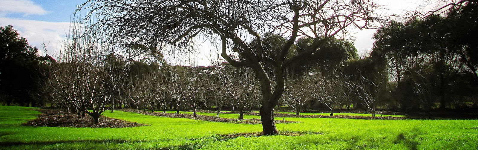 Toora Pear Orchard