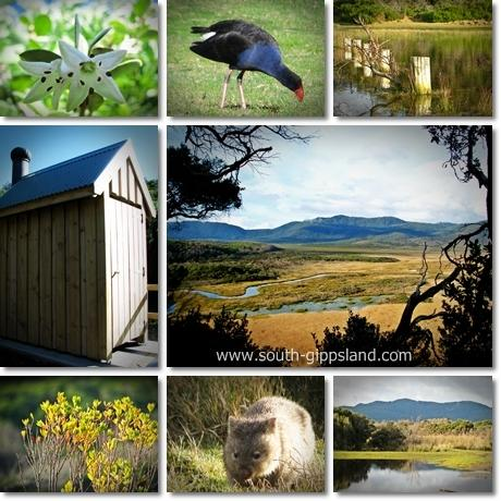 Collage of photographs taken at Darby River at Wilsons Promontory National Park