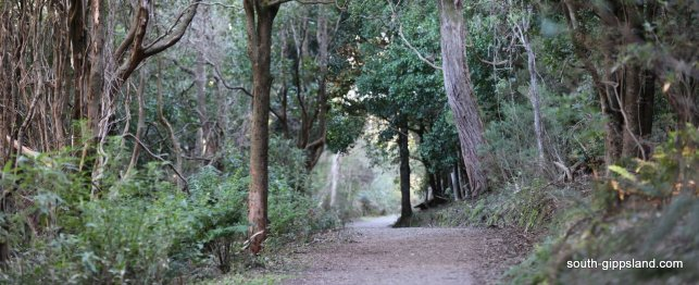 lilly-pilly-gully (36)