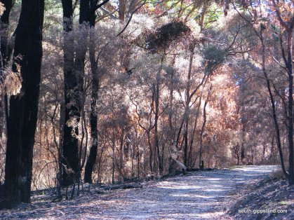 lilly-pilly-gully-fire-damage (8)