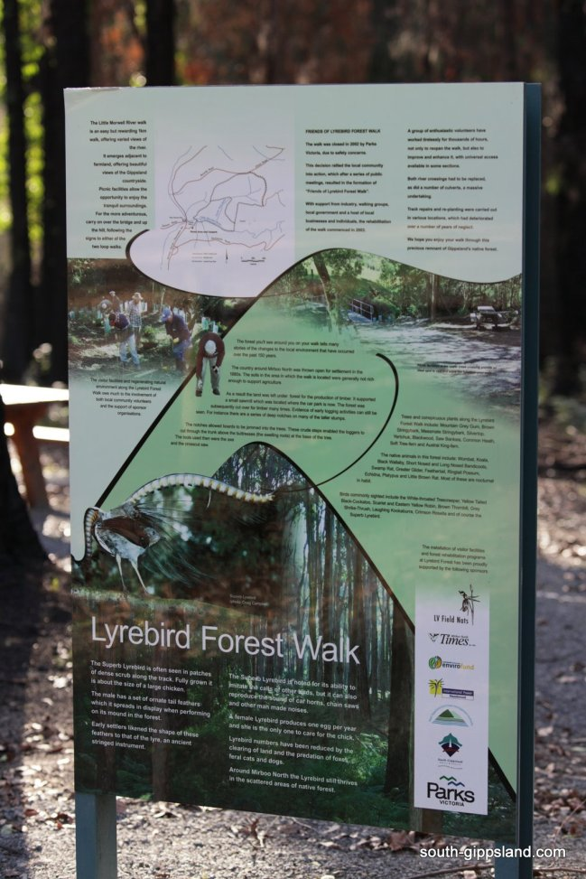 lyrebird-walk-mirboo-north (3)