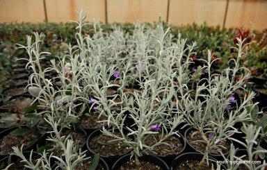 narkabundah-native-plant-nursery (13)