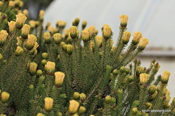 narkabundah-native-plant-nursery (33)