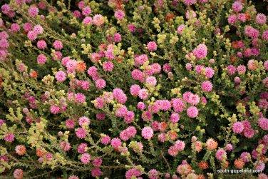 narkabundah-native-plant-nursery (39)