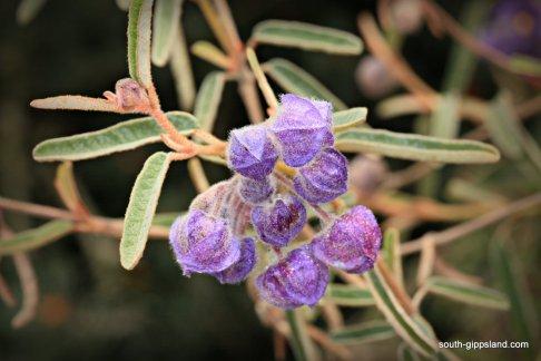 narkabundah-native-plant-nursery (40)