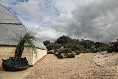 narkabundah-native-plant-nursery (8)