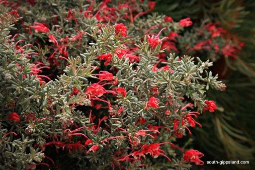 narkabundah-native-plant-nursery (9)