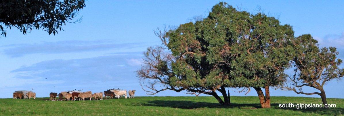 walkerville-farm-panorama