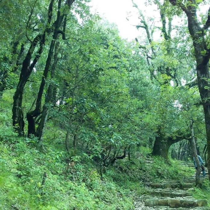 pandavkholi-trek-rishikesh.jpg
