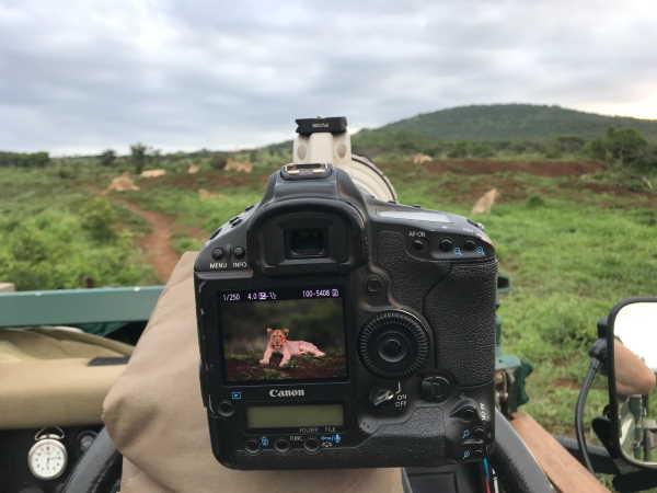 Wildlife & Photography Weekend at Thanda Safari
