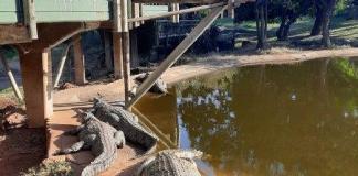 Celebrate World Croc Day with Crocworld Conservation Centre!