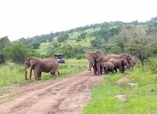 Top Things to do in Tanzania