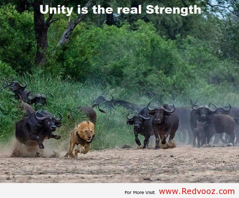 UnityisStrength  South Africa Today