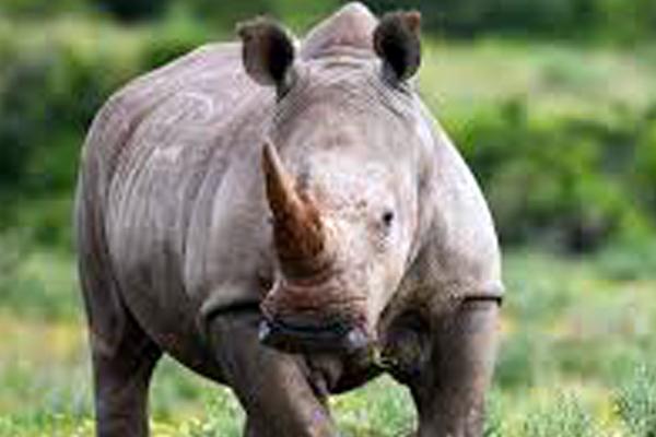 Two alleged poachers arrested on farm in Hoedspruit