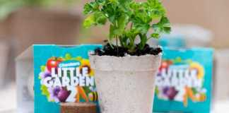 Checkers Little Garden back by popular demand with locally-produced seedling kits