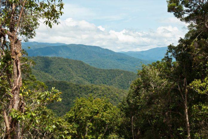 Rainforest in the Tamrau Mountains, West Papua, Indonesia. Photo RBG Kew