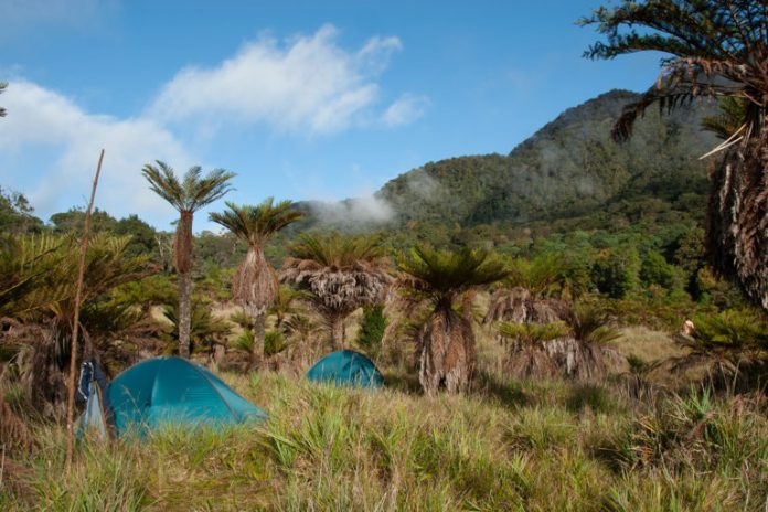 Scientists' campsite in a tree fern savanna in the Cromwell Mountains of Papua New Guinea. Photo RBG Kew.