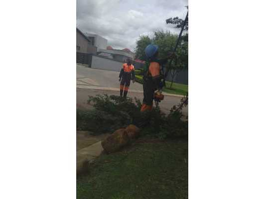 Why should you trim your trees?