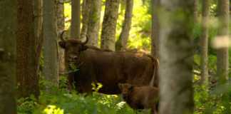 World Wildlife Day 2021: Forests and Livelihoods - Sustaining People and Planet