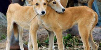 Bravecto helps animal welfare organisations through far-reaching #BravectoCares campaign