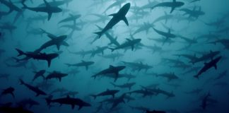 National Geographic is making a splash this July with the ninth annual Sharkfest