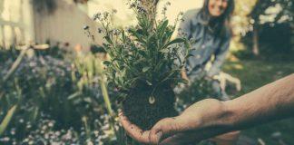 5 garden mistakes that spoil our gardens