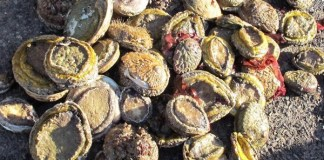 Abalone worth R20.2 million recovered, 9 foreign nationals arrested, Cape Town