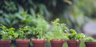 Indoor and outdoor plant pots