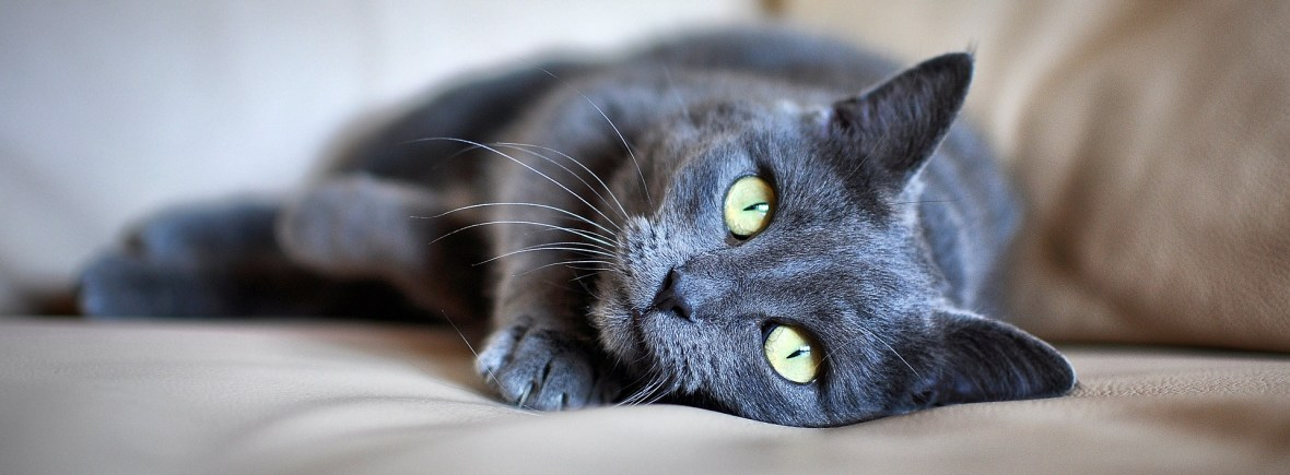 A comfortable cat lies down on a couch.