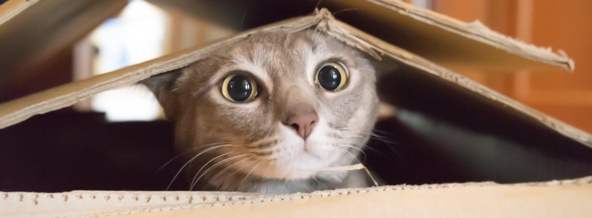 A cute, curious cat peeks his head out of a cardboard box.