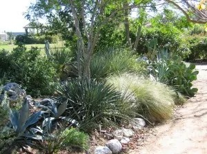 xeriscaping in texas south austin