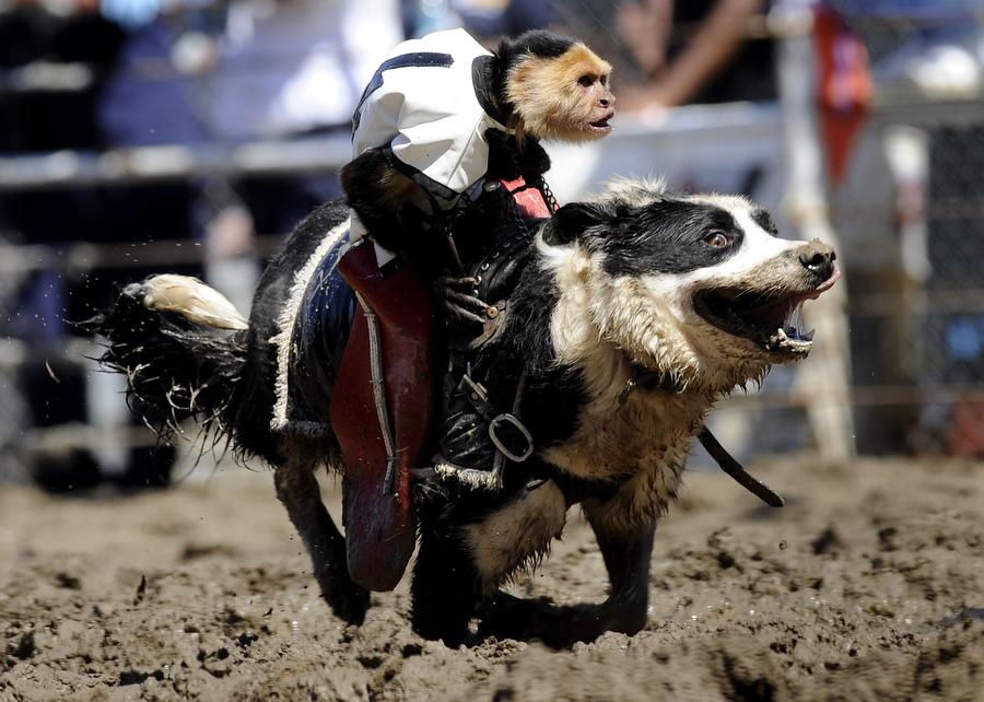 Worlds eighth wonder: Monkeys riding dogs