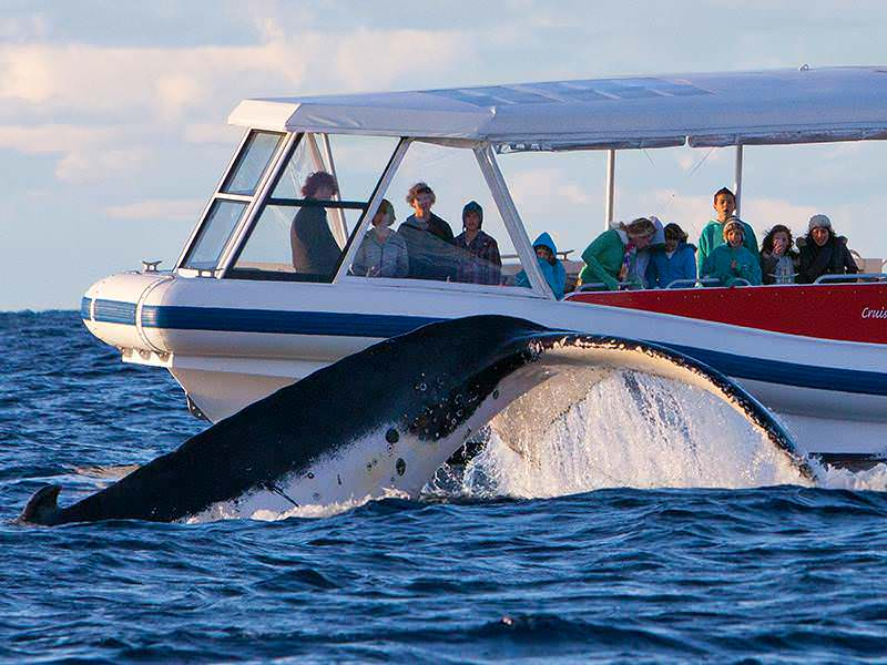 Image result for Whale Watching in Sydney During Winters