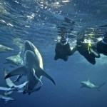 Shark Cage Diving KZN - South Coast Map
