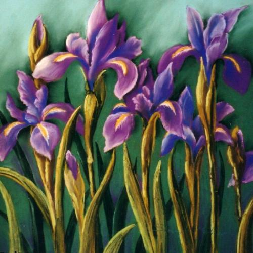 Dutch Irises