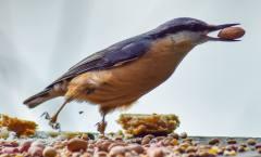 Animal photos from Torbay