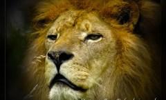 A few animal photos from Devon zoos / parks