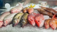 fresh fish on ice in a market