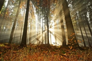 autumn morning forest