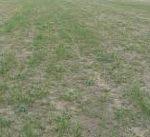 pasture-dry