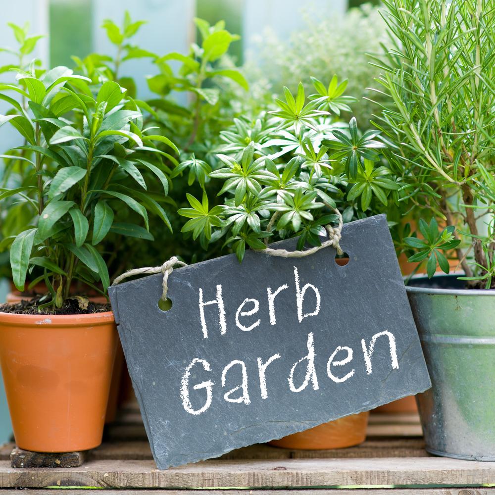 Tips For Starting A Flower Garden Southeast Agnet