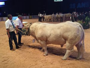The Charolais breed National Championship competition involved 430 animals at the 2016 Sommet de L'Elevage.
