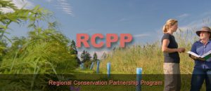 conservation proposals rccp