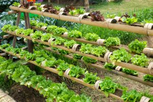 growing vertical gardening vegetables