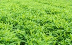 gardening farming cover crops