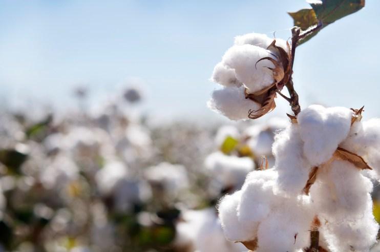 Cotton Coverage Maps
