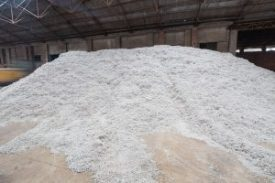 cottonseed in a cooking oil processing factory