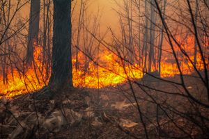 state wildfire