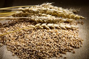 wheat growers ddgs exports